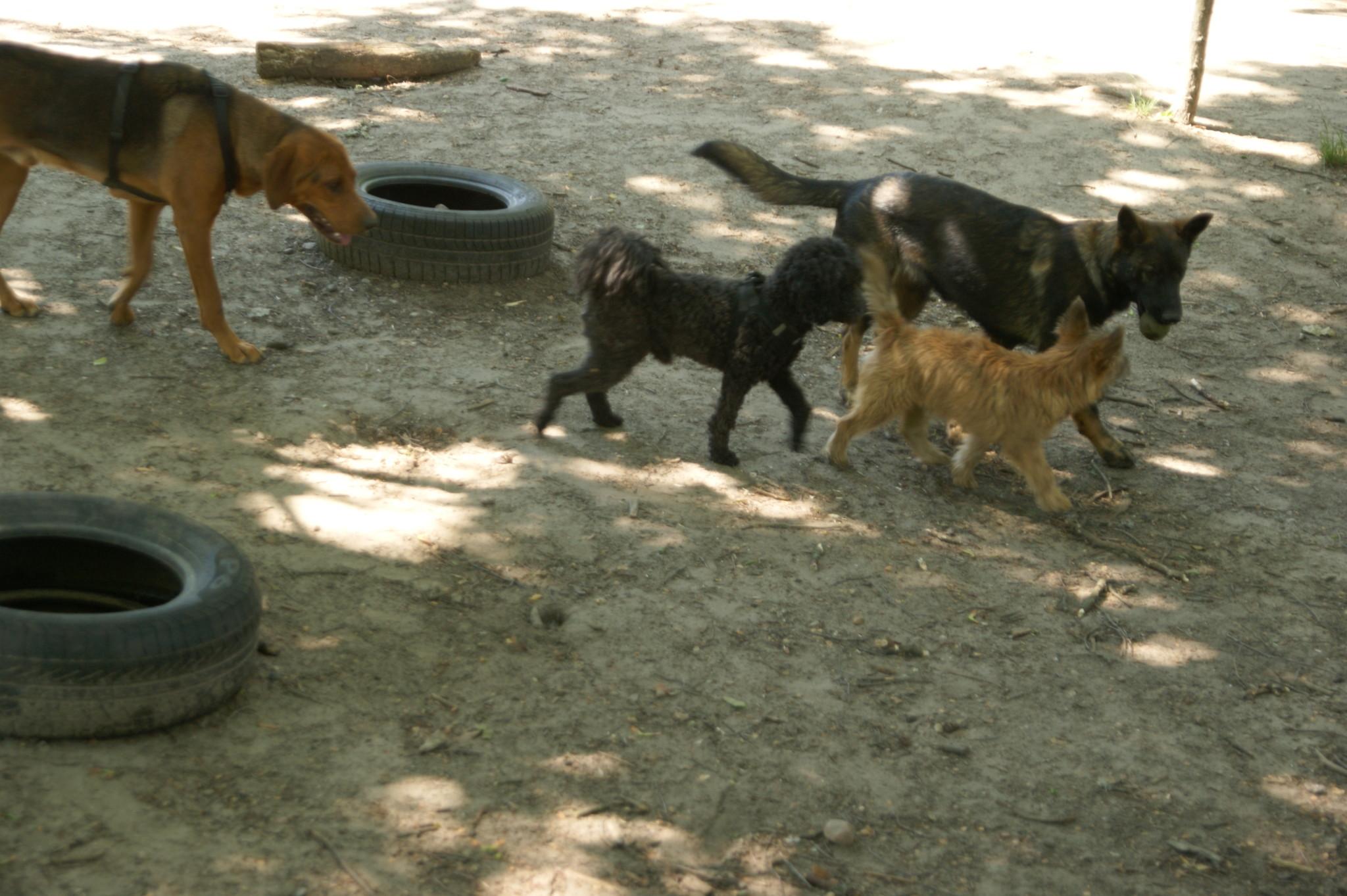 Verhalten Hunde untereinander