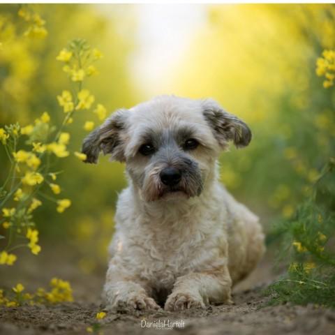 Hunde fotografieren: Mit diesen 5 Tipps gelingen dir endlich tolle Fotos von deinem Liebling!