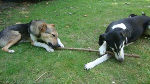 Ein Hund und die Schule 1: Heimtraining