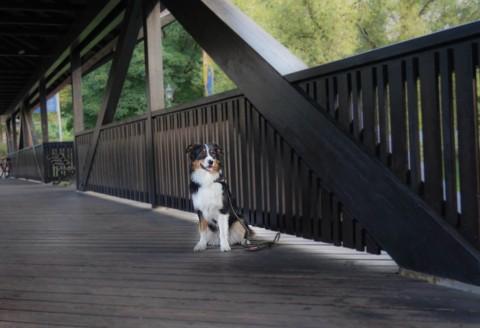 Akute Lebensgefahr für Hunde lauert in jeder Küche – Xylit