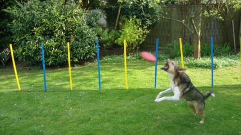 Ein Hund und die Schule 3 – Spielgruppe
