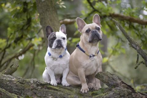 [Blogparade] Auf den Hund gekommen – Wie meine Jungs zu mir gefunden haben