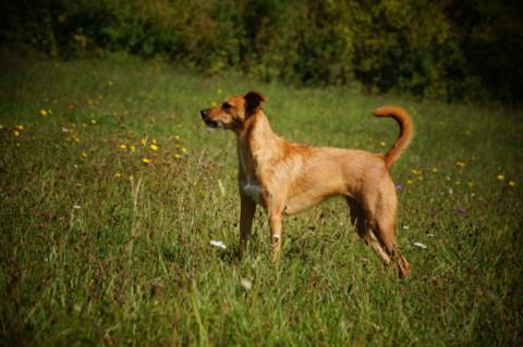 Nachhaltigkeit im Hundeleben