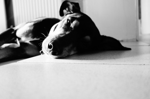 Das Ding mit der Emotion oder ich hab Stress und mein Hund hört nicht