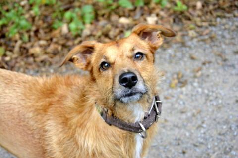 Helikopter Frauchen // Herrchen – Wenn Liebe den Hund krank macht