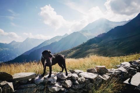 Fotoshooting mit Hund – #grumpydog Flummi im Einsatz