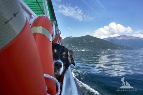Lago Maggiore: Schifffahrt & Panoramawanderung mit Hund bei Cannobio