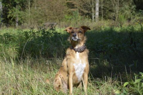 Hundehäufchen – Die Geschichte einer Selbsthilfegruppe