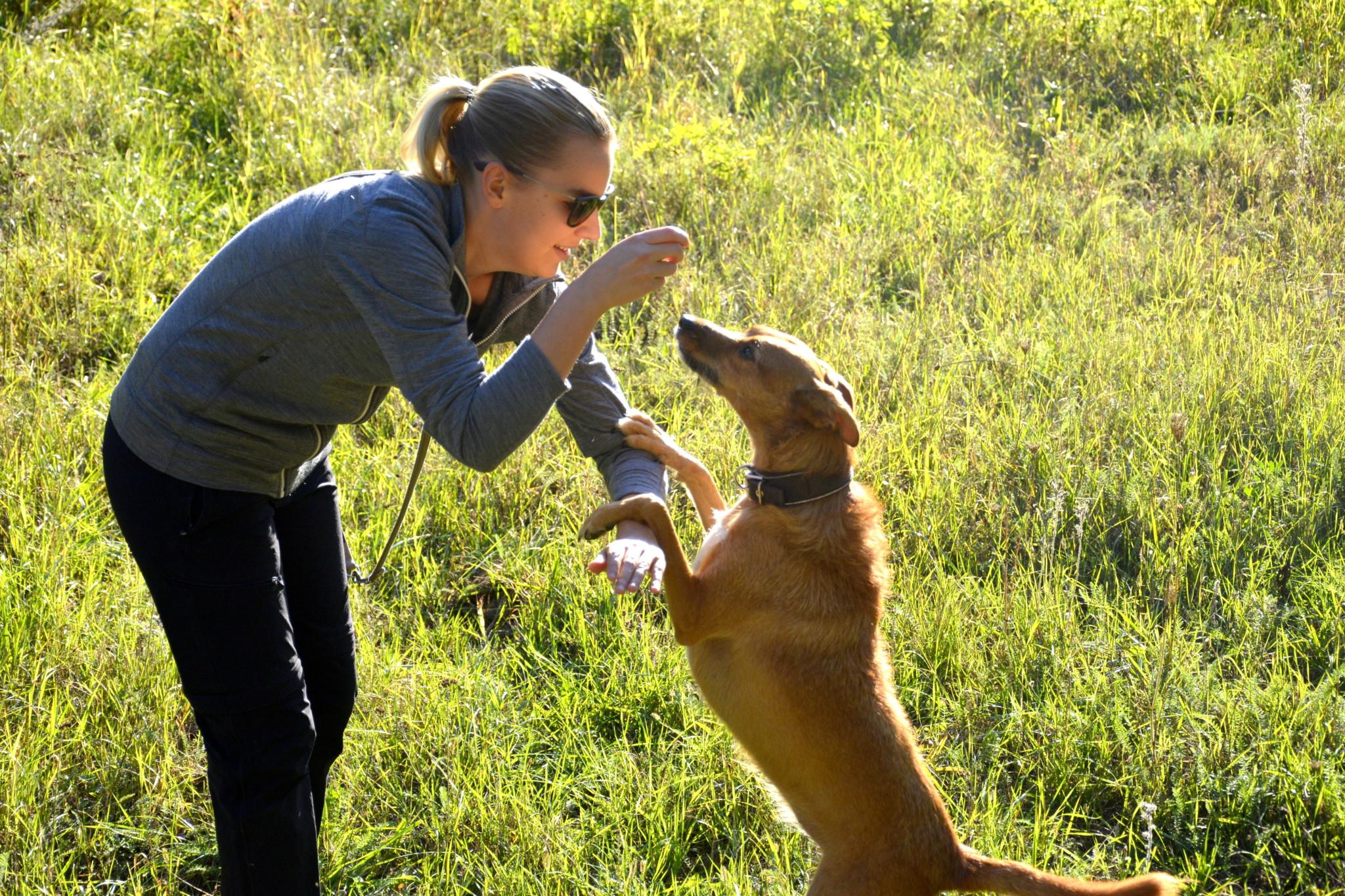 Hundetrainer Methode
