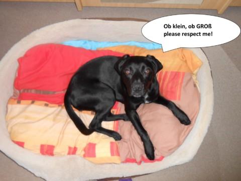 10 Arten von Hundebesitzern und nicht-Hundebesitzern, ohne die das Leben einfacher wäre!!! Teil 3/5
