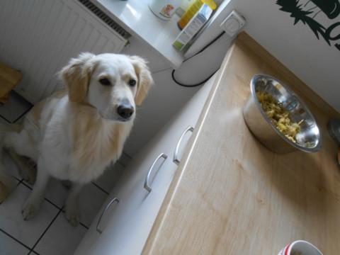 8 mögliche Gründe um eine Hundeernährungberaterin um Rat zu fragen