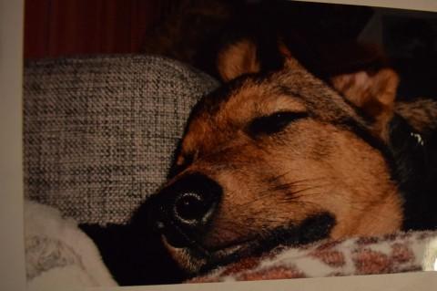 Hundeliebe -Wie Holly zu mir kam