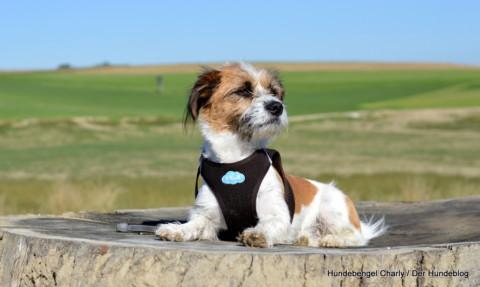 Braucht ein Hund soziale Kontakte?