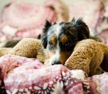 [MiDoggy Parade] Bettgeflüster – Hund im Bett ist nett.