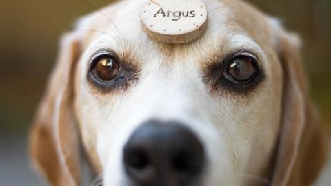[Interview und Produkttest] Hundsstück