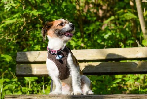 3 Jahre Hundebengel Charly – wie die Zeit vergeht!