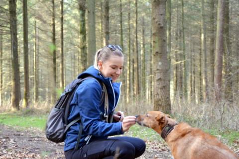 Hundetrainerin – individuelle & pauschalisierte Dolmetscherin für Hunde