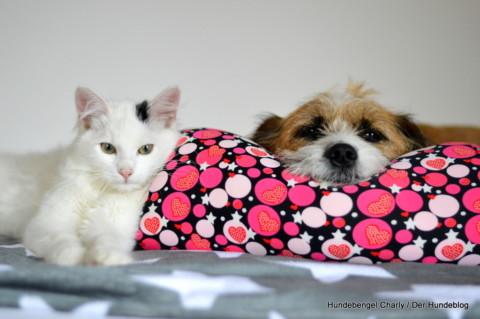 Bin ich ein Hundemensch oder ein Katzenmensch?