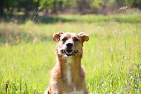 Die Spezies Jogger – in freier Wildbahn gesichtet & erforscht