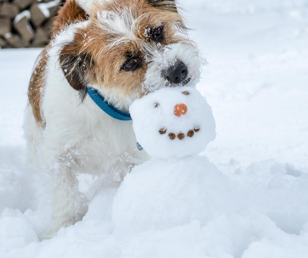 Schneebilder Hund