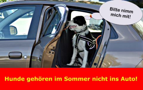 ACHTUNG! – Hund im Backofen