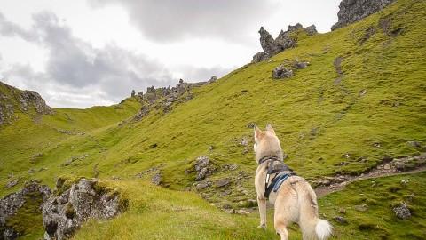 Schottland mit Hund und Wohnmobil