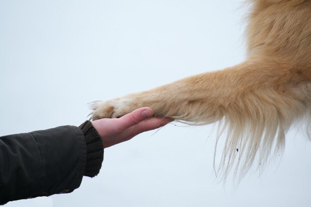 Möglichkeiten der Hundebestattung