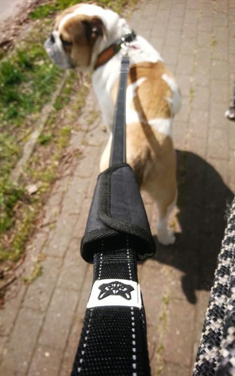 Schnitzel testet die FOXY & FURRY multifunktionale Hundeleine