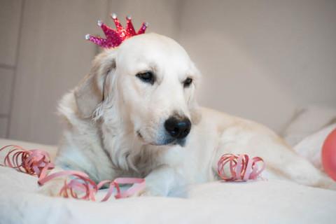 HappyDogLife.de wird heute 1 Jahr alt! (Verlosung)