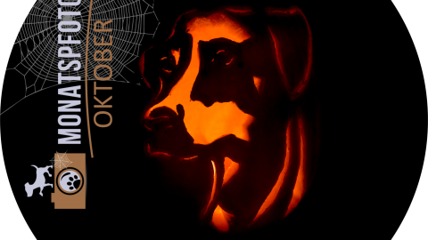 """Monatspfoto Oktober""""Halloween im Zeichen des Hunde-Kürbis""""[midoggy]"""
