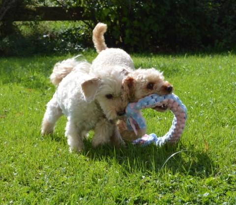 Fleecezergel einfach selbermachen – Hundespielzeug ohne Nähen