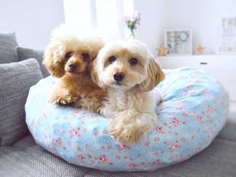 Kuschliger Kringel – Einfaches Hundebett Selbernähen