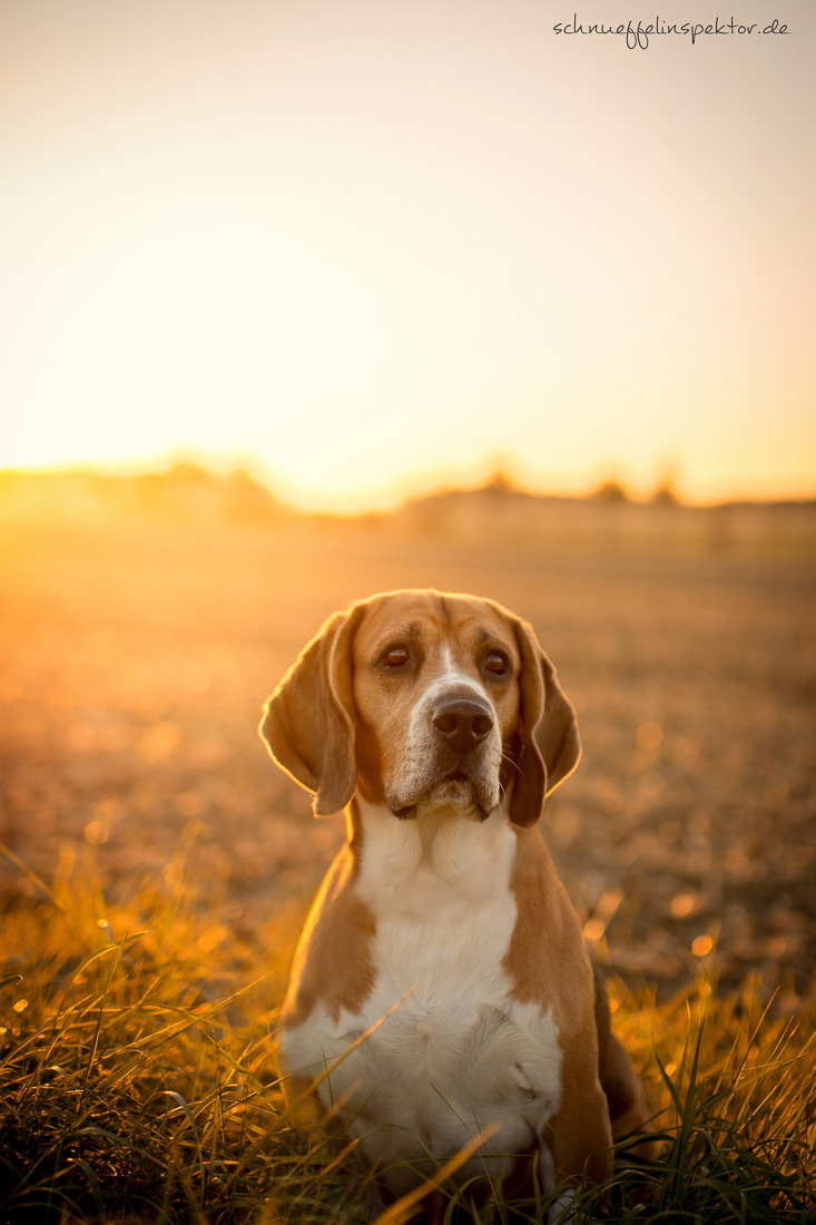 Hundeblogger Domino