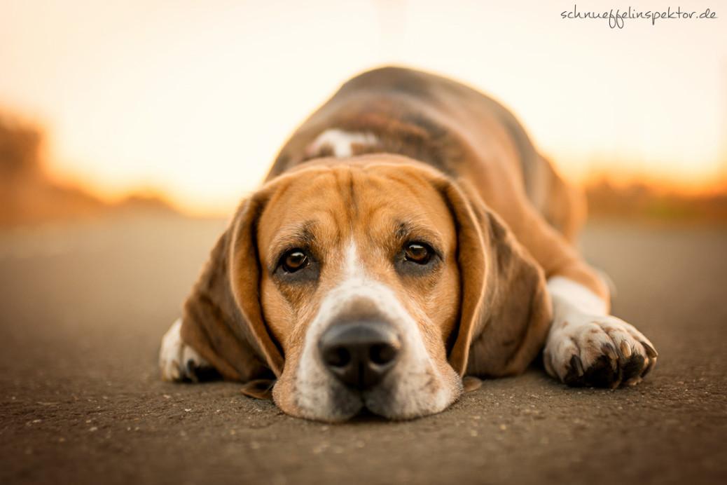 Hund als Kindersatz