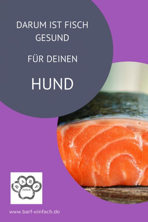 Darum ist Fisch gesund für deinen Hund
