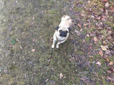 Mein Vorbild Schmiddi: Was ich von meinem Hund noch lernen kann
