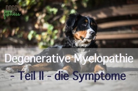 Degenerative Myelopathie Teil II – diese Symptome solltest du kennen!