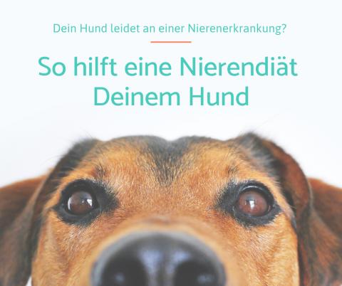 Die Nierendiät beim Hund