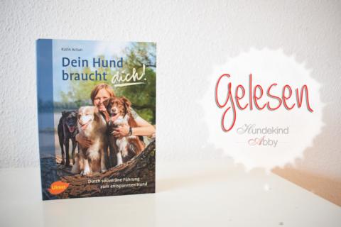 Dein Hund braucht dich – Werbung