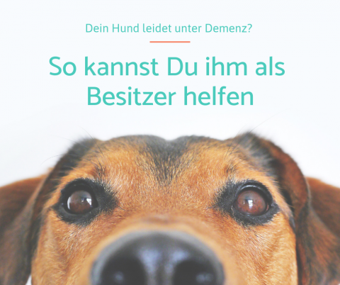 Demenz beim Hund – Das kannst Du als Besitzer tun
