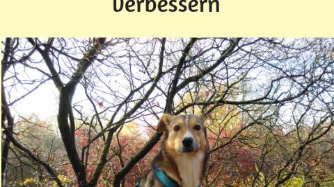 Die Beziehung zum Hund verbessern: Stimmungsübertragung