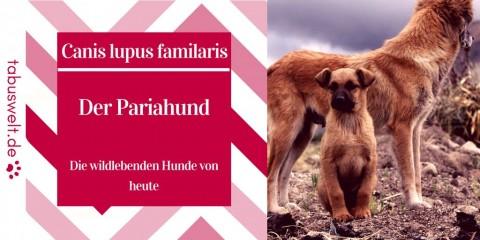 Der Pariahund – die wildlebenden Hunde von heute