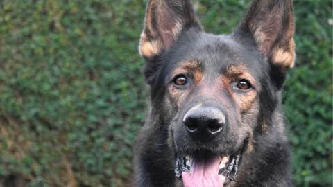 Hundesport, Gesundheit und Training – das sind die Top Artikel