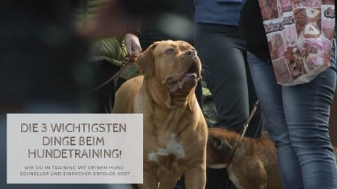 Die 3 wichtigsten Dinge beim Hundetraining