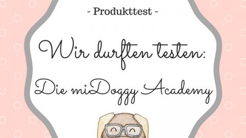 [Produkttest] Wir durften testen: Die miDoggy Academy! [Anzeige]