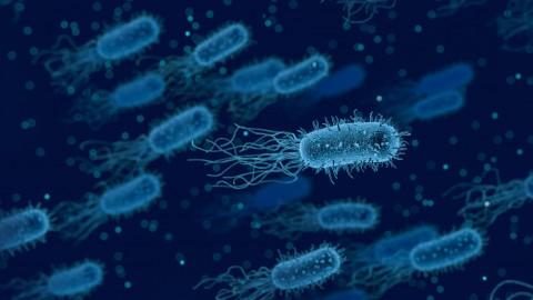 Die wichtigsten Infektionskrankheiten bei Hunden II