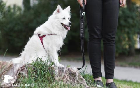 Die Stadthunde testen die FOXY & FURRY multifunktionale Hundeleine
