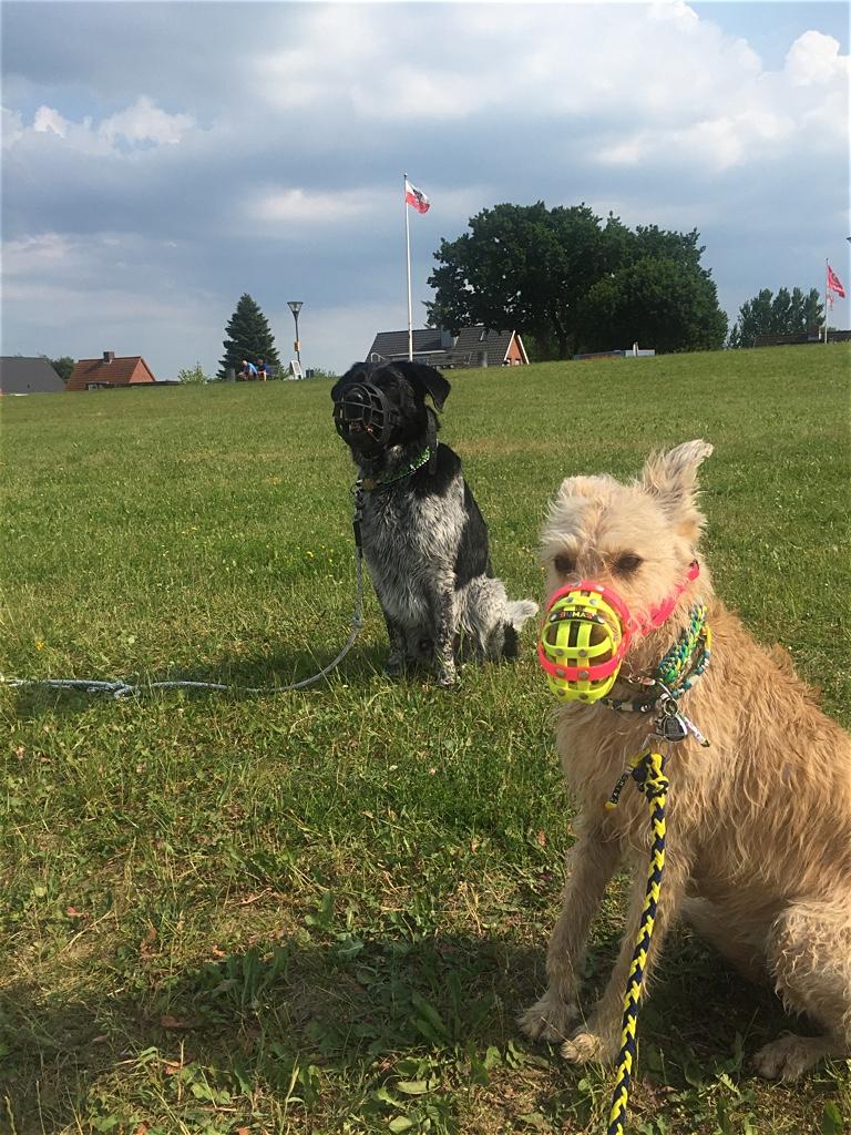 Hundebloggertreffen