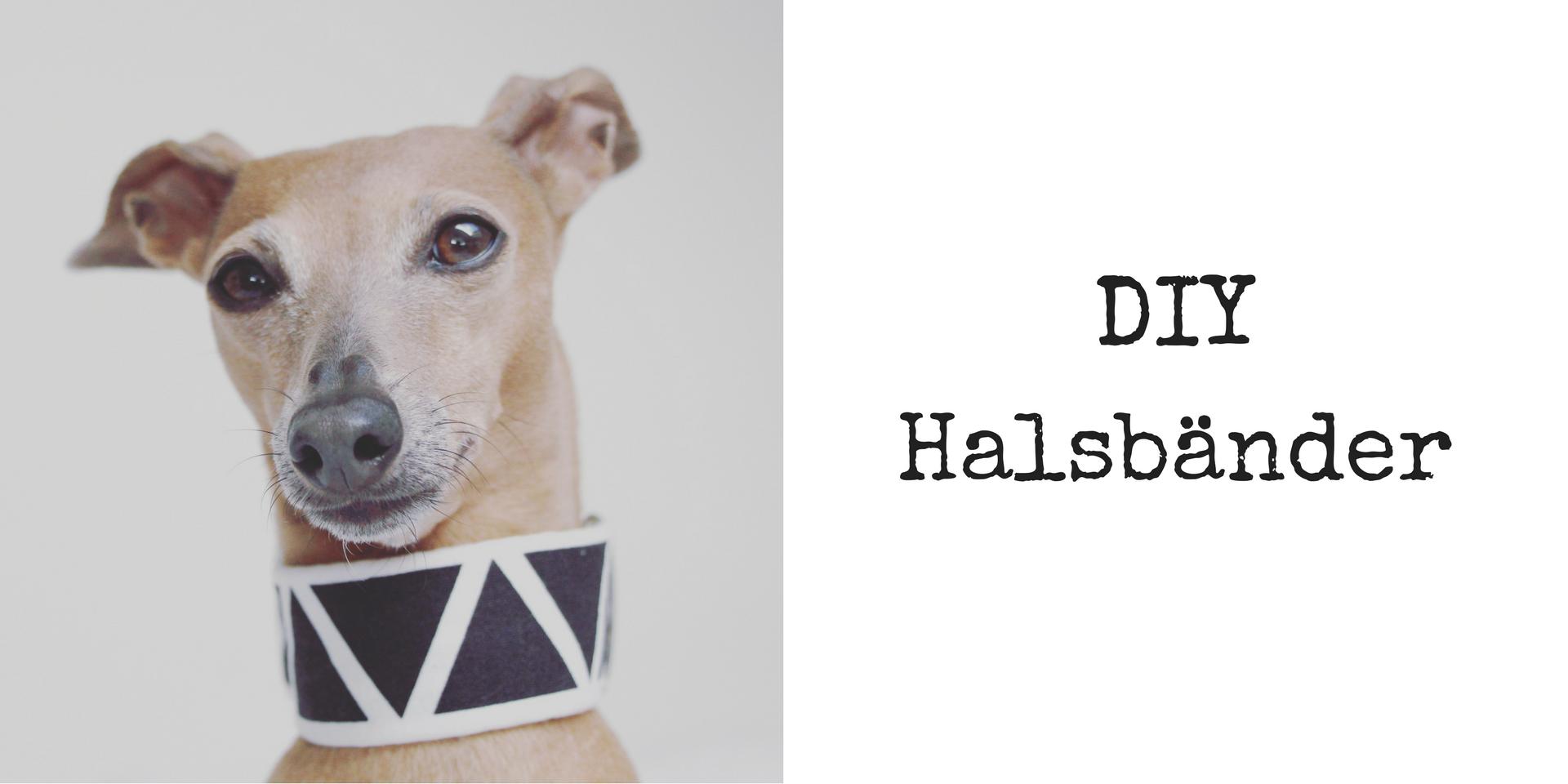 Do it yourself DIY Halsbänder für den Hund