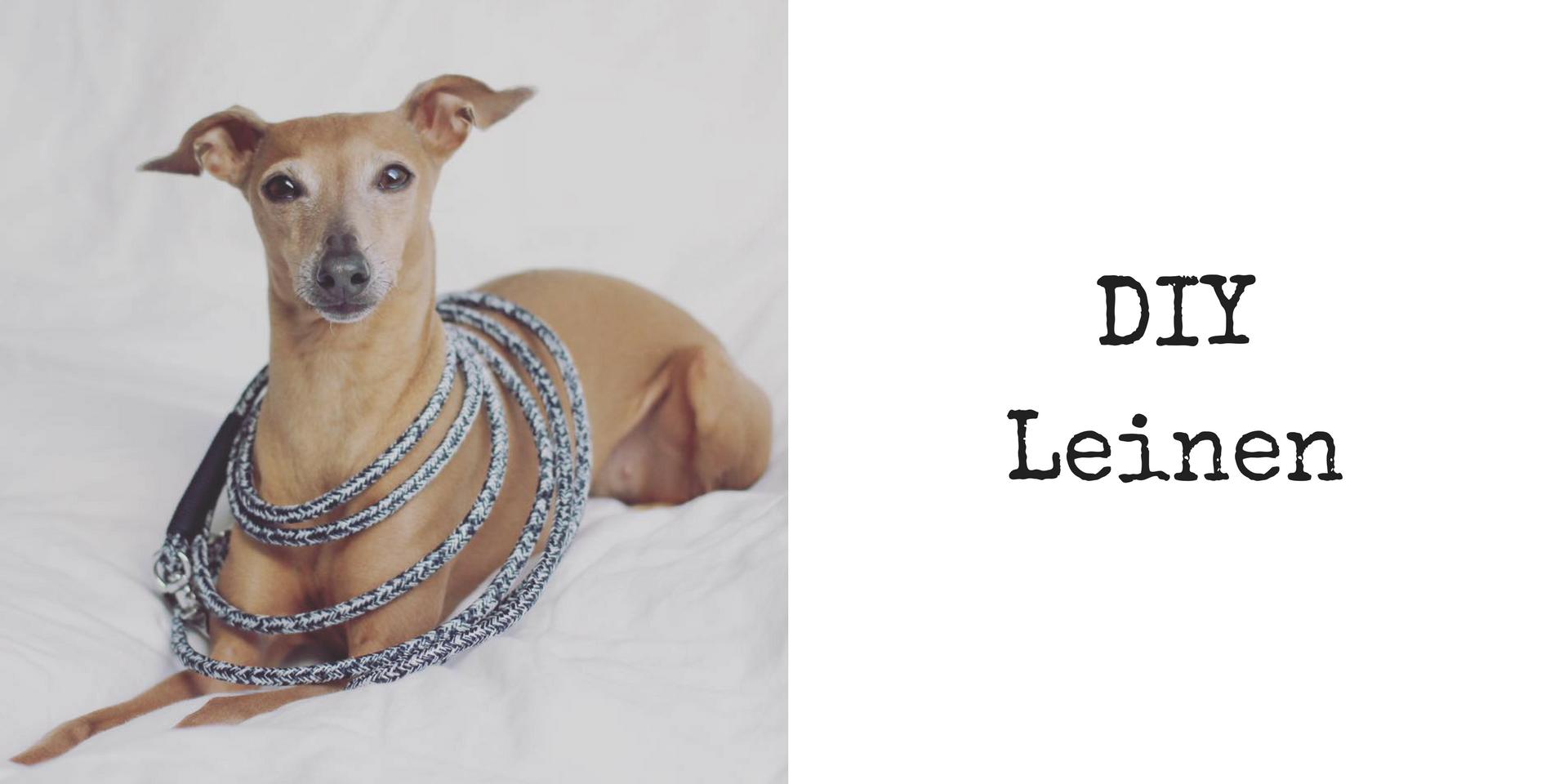 Do it yourself DIY Leinen für den Hund
